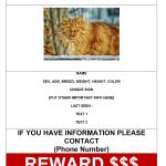 Missing Cat Poster