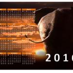 2016 Photo Calendars